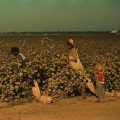 Marion Post Wolcott, Day laborers picking cotton near Clarksdale, Mississippi Delta, 1939